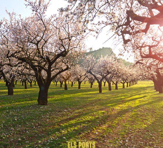 Horta de sant Joan - Visita Els Ports - Jordi Ferrer Ber